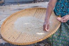 Der Reis, der für thailändisch ist, isst alle Person Stockfotografie