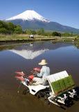 Der Reis-Pflanzer Stockfoto