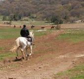 Der Reiter stockfotos