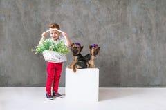 Der reizend blonde Junge mit einem Blumenkorb und zwei wenige Yorkshire-Terrier Stockfotos