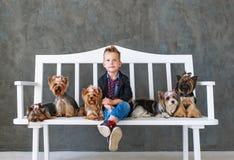 Der reizend blonde Junge sitzt auf einer weißen Bank in einer Umwelt von fünf wenigen Yorkshire-Terriern Stockbild