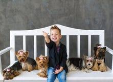 Der reizend blonde Junge sitzt auf einer weißen Bank in einer Umwelt von fünf wenigen Yorkshire-Terriern Lizenzfreie Stockfotografie