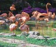 Der Rest des Flamingoteichs Stockfotos