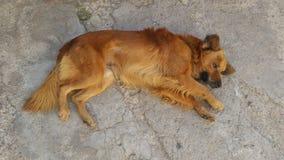 Der Rest meines Hundes Lizenzfreies Stockbild