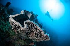 Der riesige Schwamm (Petrosia-lignosa) ist zu Gorontalo, Indonesien gebürtig Stockfotografie