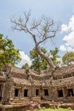 Der riesige und alte Baum an Ta Prohm, Angkor Wat Lizenzfreies Stockfoto