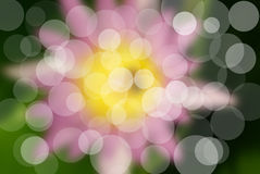 Der rosafarbene Lotos Stockfoto