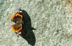 Der rote Admiral - Vanessa-atalanta Schmetterling mit Schatten auf dem alten Wandabschluß des Schmutzes oben Stockbilder