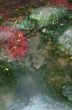 Der rote Baum im Fluss Lizenzfreie Stockfotos
