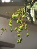 Der rote Samen ist der Inhalt lizenzfreie stockfotografie