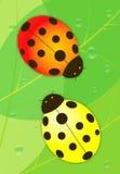 Der rote und gelbe Marienkäfer Stockbild