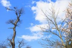 Der ruhige blaue Himmel lizenzfreie stockfotos