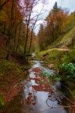 Der ruhige Fluss fließt in einen schönen Herbstwald stockbild
