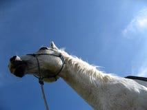 Der ruhige Schutz eines Pferds Stockbild