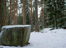 Der Rundtischfelsen im Wald stockbild