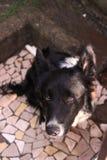 Der süße Blick eines zuverlässigen Hundes Lizenzfreies Stockfoto