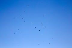 Der Satz von den Adlern, die in den Himmel fliegen Stockfotos