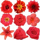 Der Satz von roten Blumen Stockbilder