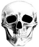 Der Schädel (Frontseite) Stockbild
