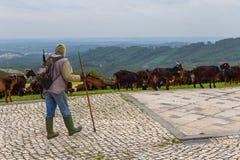 Der Schäfer Tending The Flock der Ziege an einem bewölkten Tag stockbild
