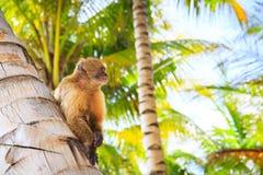 Der schöne Affe Lizenzfreies Stockfoto
