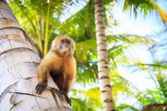 Der schöne Affe Stockbilder