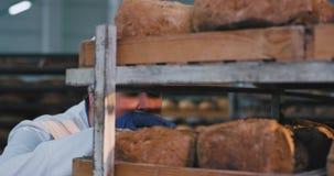 Der schöne Chefbäcker, der das frische organische Brot mit Vergnügen nimmt sie sehr enthusiastisch riecht, etwas Brot von stock video footage