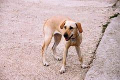 Der schöne Hund erwartet seinen Eigentümer auf der Straße stockbild