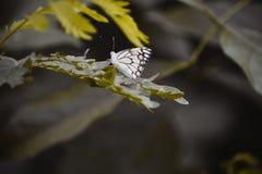 Der schöne Schmetterling lizenzfreies stockbild