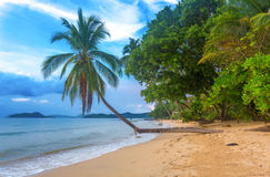 Schöner tropischer Strand Stockfotografie