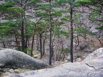 Der schöne Wald im Berg Lizenzfreies Stockbild
