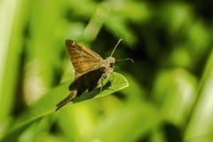 Der sch?ne Schmetterling lizenzfreie stockbilder