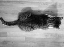 Der Schatten Lizenzfreie Stockfotografie