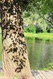 Der Schatten der Blätter auf der Baumrinde Stockfotos