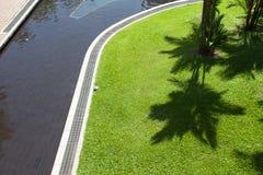 Der Schatten der Palmen auf dem grünen Gras Stockbild
