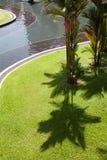 Der Schatten der Palmen auf dem grünen Gras Lizenzfreie Stockfotos