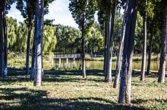Der Schatten der Teichseite Stockbild