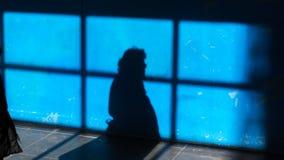 Der Schatten einer Frau auf einer blauen Oberfläche lizenzfreies stockfoto