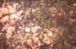 Der Schattenbildhintergrund des tree' s-Niederlassungen, wenn Sie herausgestellt werden lizenzfreies stockbild