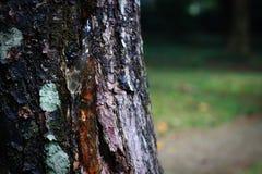Der Schlamm auf dem Baum Lizenzfreies Stockbild