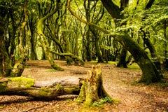 Der Schleppangel-Wald lizenzfreie stockfotografie