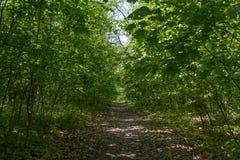 Der schmale Fußweg im Holz Stockbild