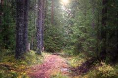 Der schmale Weg, der tief in den gezierten Wald einsteigt, belichtete durch die Sonne, selektiver Fokus Stockfoto