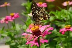 Der Schmetterling auf Blumen im Park stockfotos