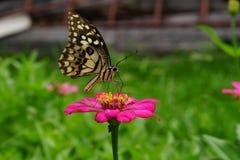 Der Schmetterling auf Blumen im Park lizenzfreies stockfoto