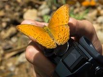 Der Schmetterling auf der Hand, die eine Kamera hält Lizenzfreies Stockfoto