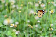 Der Schmetterling, der Schmetterling mit der Blume im Garten Lizenzfreie Stockfotografie