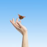 Der Schmetterling in Ihren Händen Lizenzfreies Stockfoto