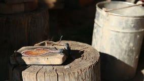 Der Schmied öffnet die Form für schmelzende Metalle stock video