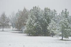 Der Schnee bedeckte Bäume Lizenzfreies Stockfoto